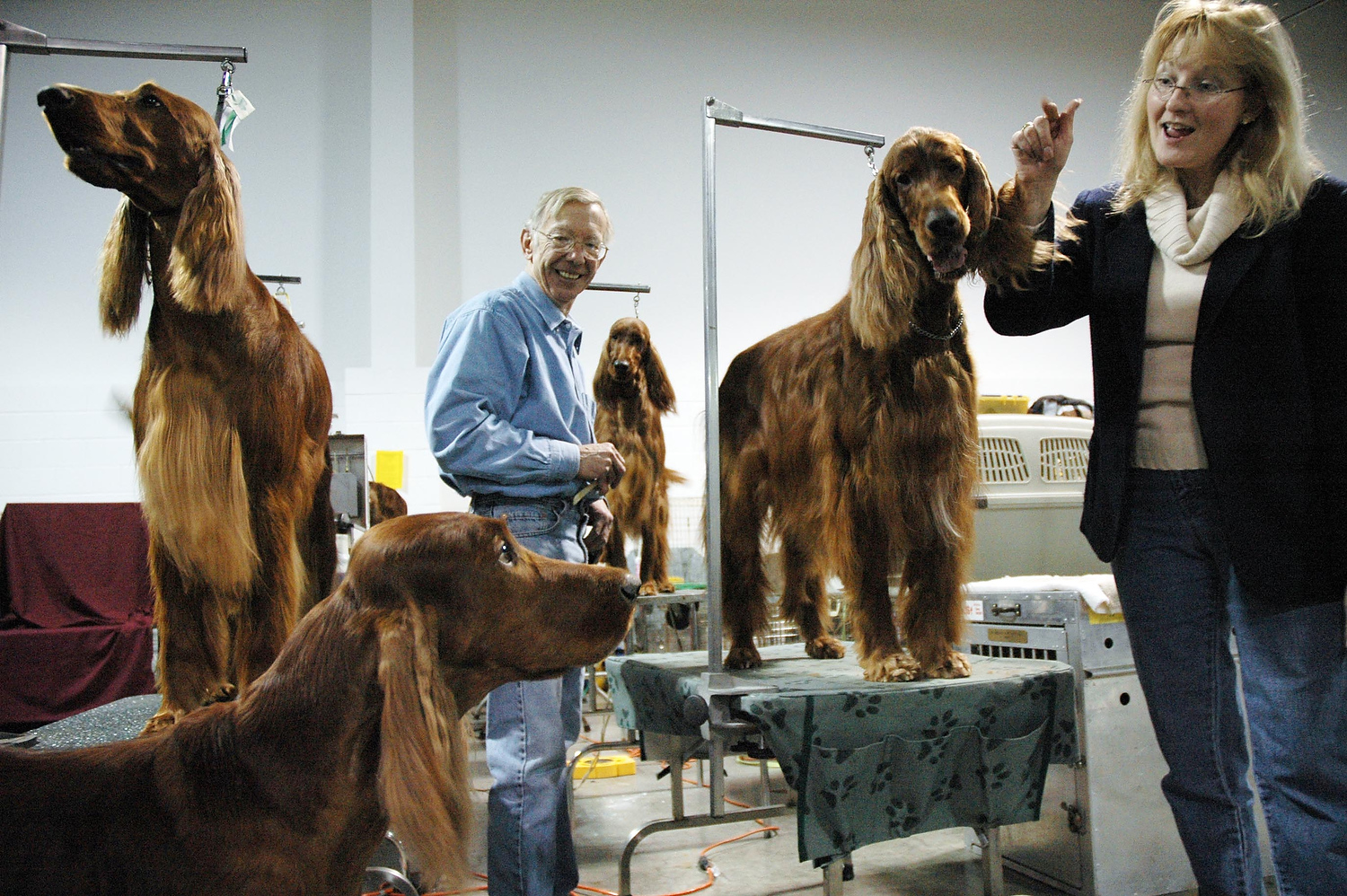 Nancy Fiacco of Bayville, N.J., calls the attention of Champion Fyrethorn Royal Guard {quote}Killian,{quote} foreground, during a break grooming a family of Irish Setters, with breeder Charlie Sloughfy, center, for the Garden Specialty Dog Show at the Meadowlands Expo Center. On the grooming tables are, from left, Fyrethorn Femme Fatale {quote}Kaela,{quote} Fyrethorn Straight Flush {quote}Celine,{quote} and Champion Fyrethorn Center Court {quote}Bryan.{quote} (Reena Rose Sibayan/The Jersey Journal)