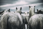 Horse-2-v