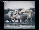 camargue_horses_vogue_italia