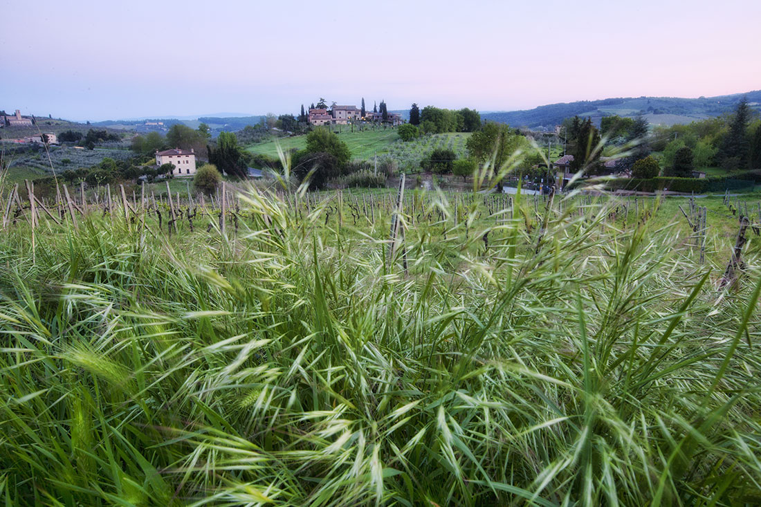 walking the fields of Tuscany