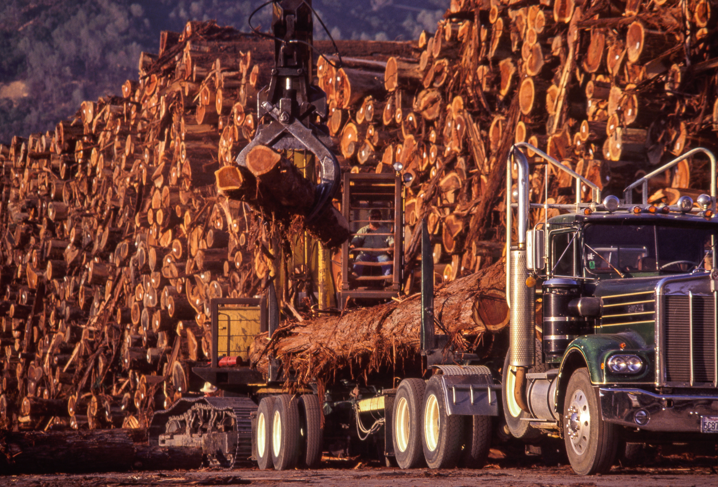Logging and Milling Operation, Scotia, CaliforniaRedwood logs are unloaded from a hauler and stacked in the log yard at a Scotia, California, logging and milling operation.
