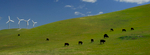 Windpower and Cows, California