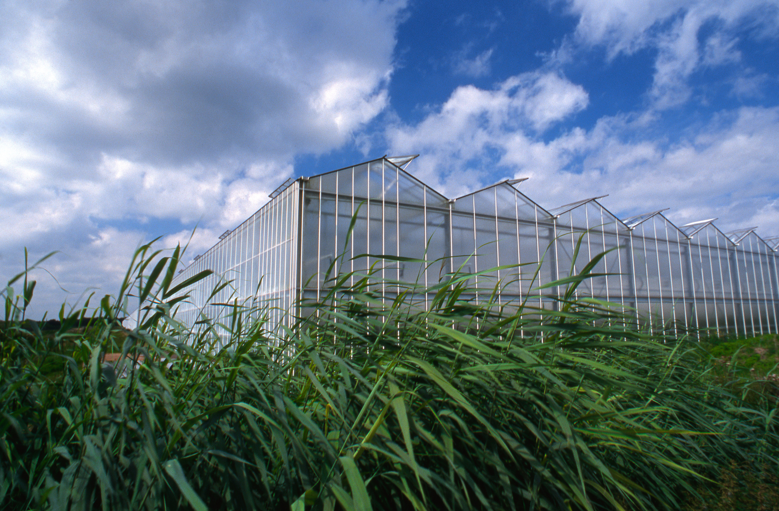 Compared to outdoor farming, greenhouses in the Netherlands have reduced water use for key crops by up to 90% and reduced chemical use by 97%.