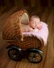 newborn-baby-girl185558
