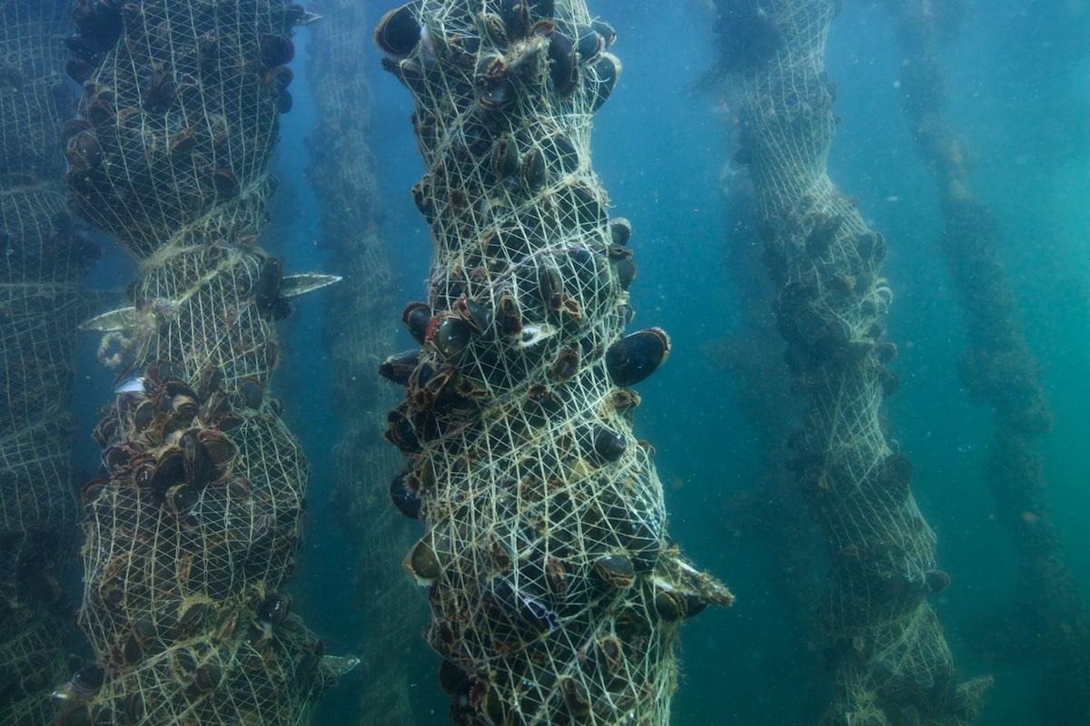 BGroark_Maine_Aquaculture_Maine-4
