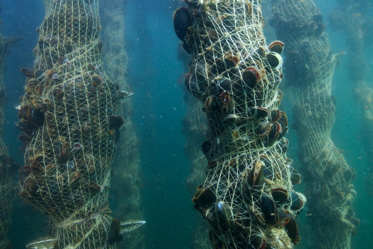 BGroark_Maine_Aquaculture_Maine-5