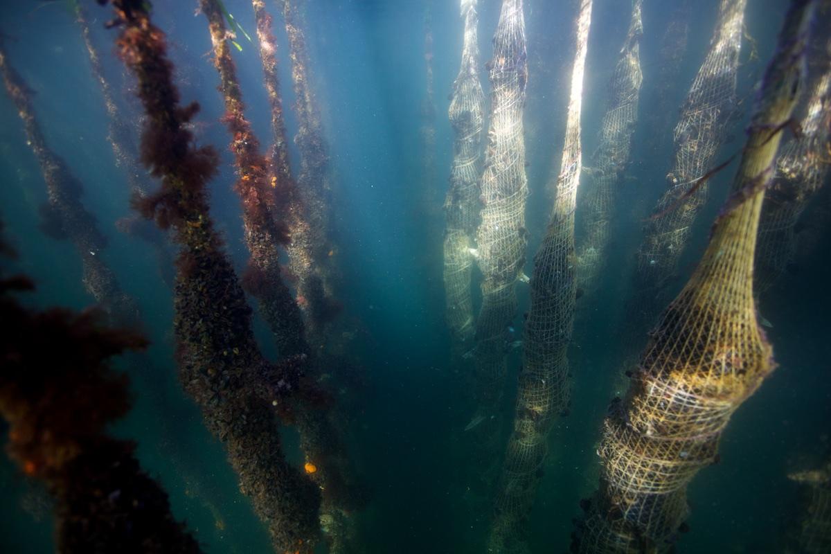 BGroark_Maine_Aquaculture_Maine-7