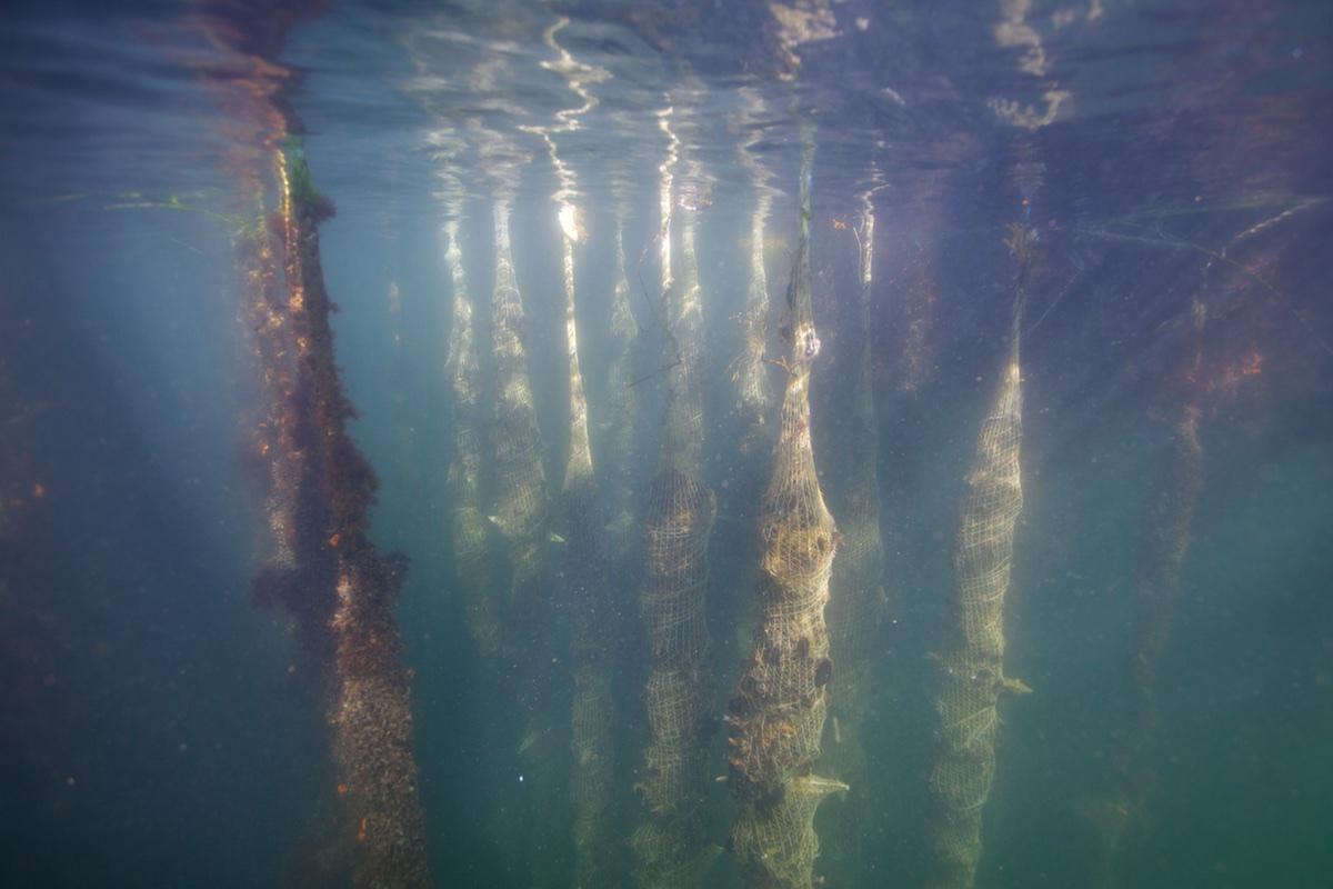 BGroark_Maine_Aquaculture_Maine-8