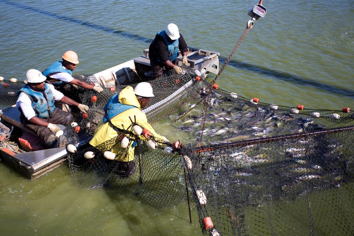 B_Groark_Alabama_Catfish_Farming-4