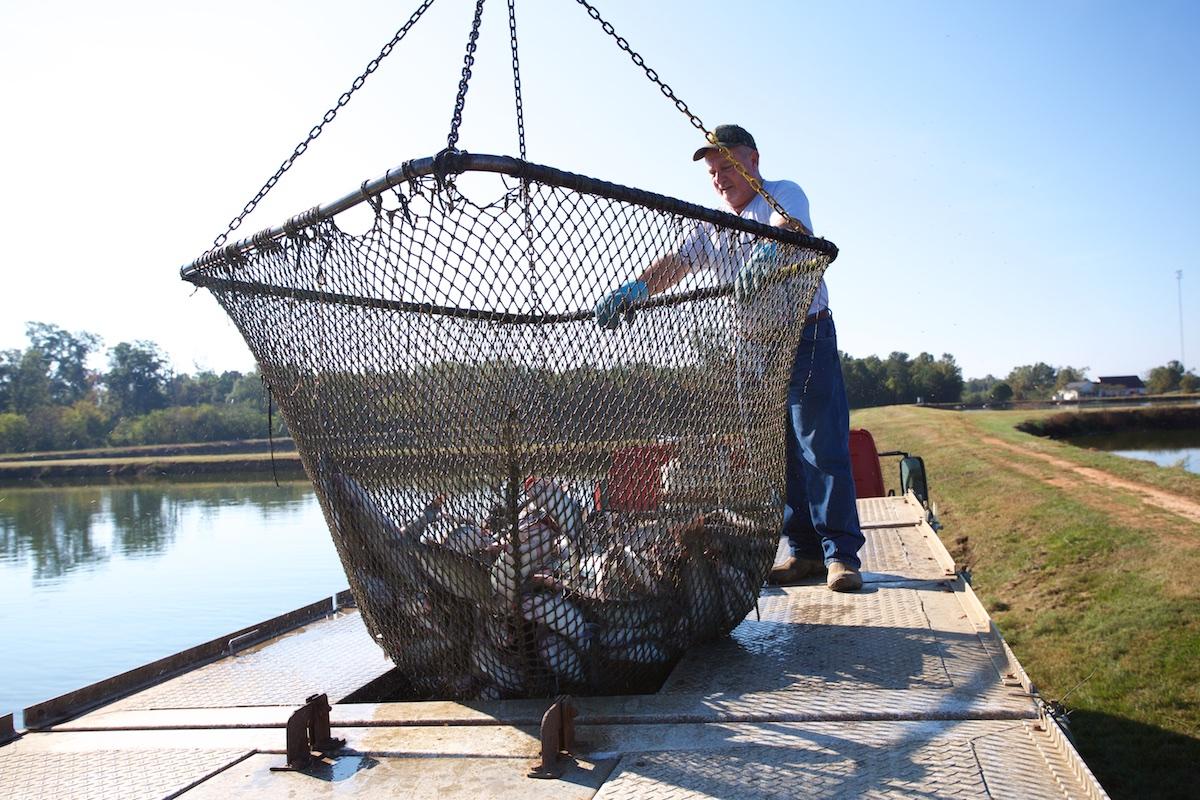 B_Groark_Alabama_Catfish_Farming-7
