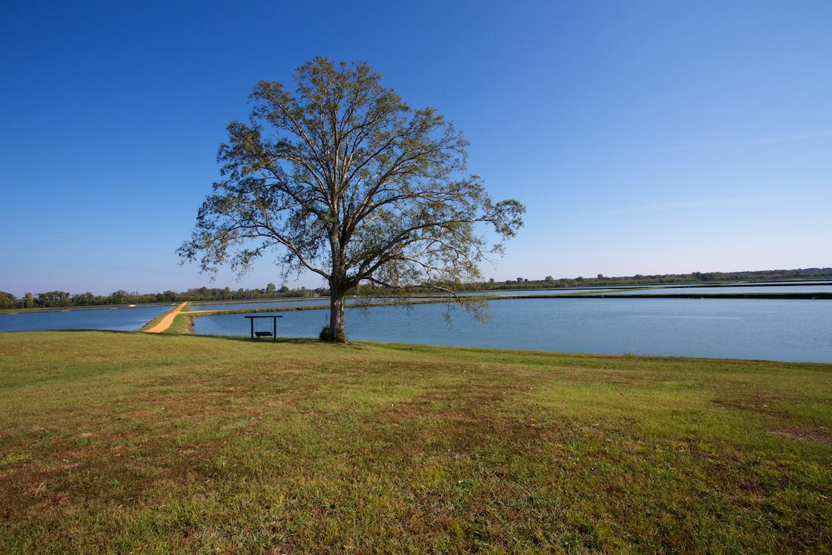 B_Groark_Alabama_Catfish_Farming-9