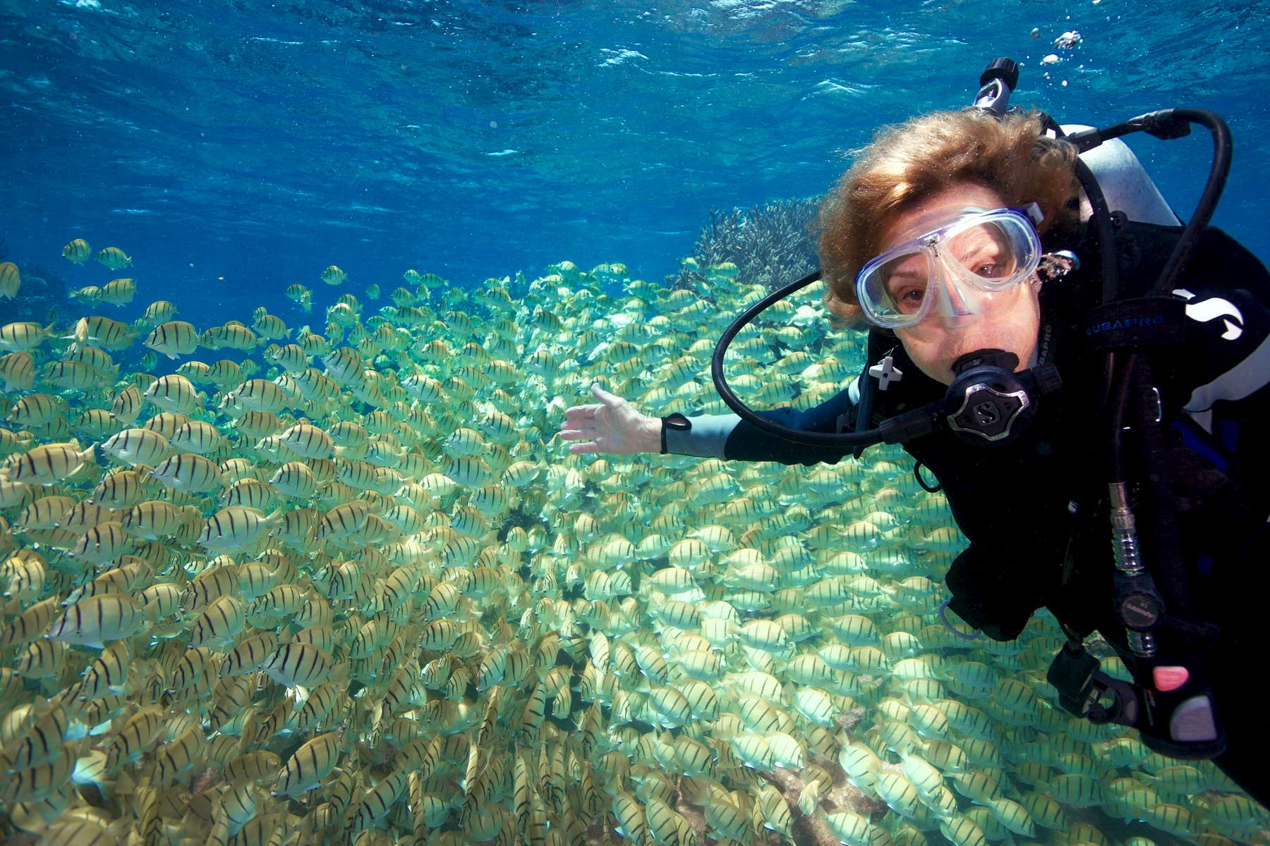 Sylvia Earle in fish school at Palmyra Atoll