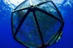 Velella Project, Kona Kampachi Inside Aquapod
