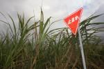 Stop Sign - Okinawa, Japan