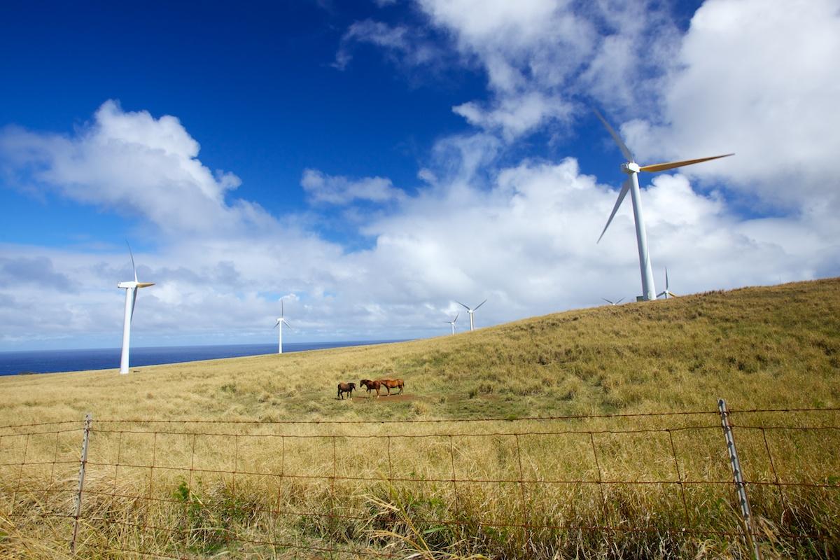 Hawi wind farm on the Big Island of Hawaii