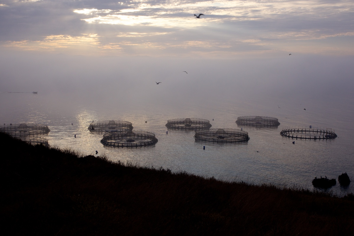 Pacifico Aquaculture, Sea Bass Fish Farm, Mexico