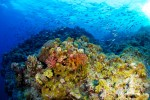 Holmes Reef, Coral Sea - Australia