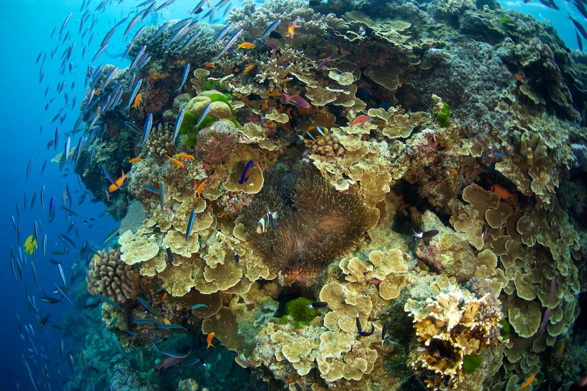 Great Barrier Reef - Australia, Steve's Bommie