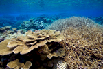 Palmyra Atoll Corals