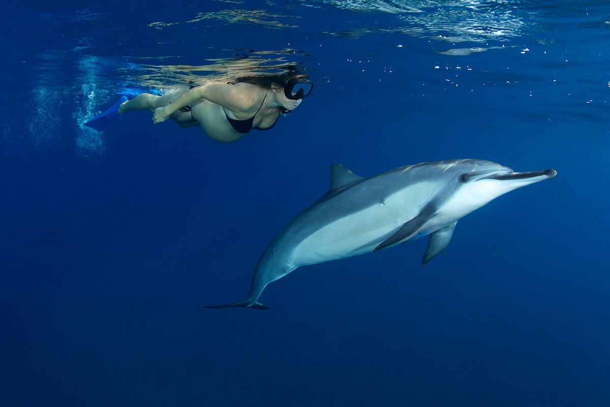 Pregnant Woman Snorkeling with Dolphins