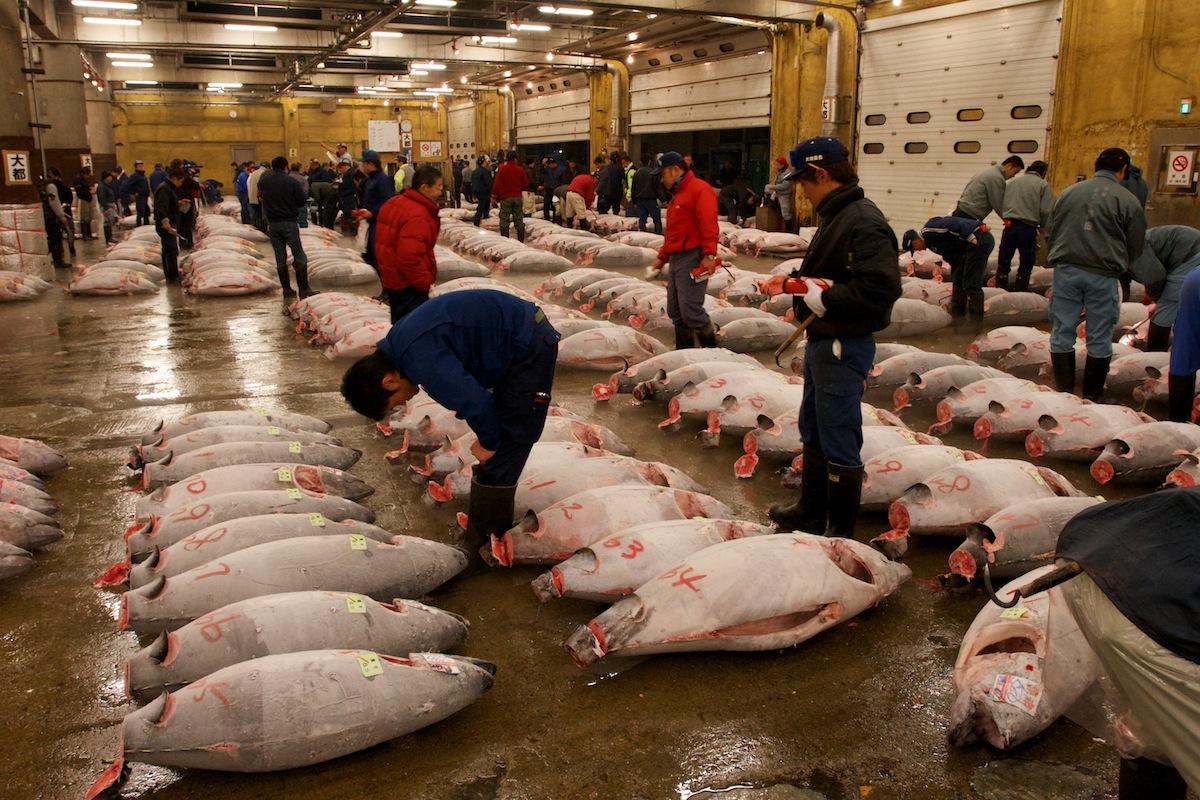 Tsukiji fish market places for Tsukiji fish market