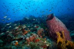 Barrel sponge and healthy reef scene in St Lucia