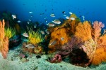 Deep Reef in the Galapagos - bustling with color and life