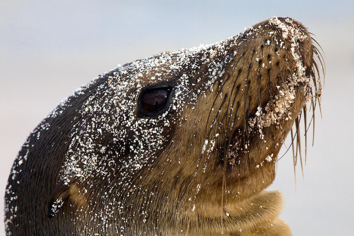 Galapagos Sea Lion - Galapagos, Ecuador