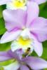 Hawaii Bees