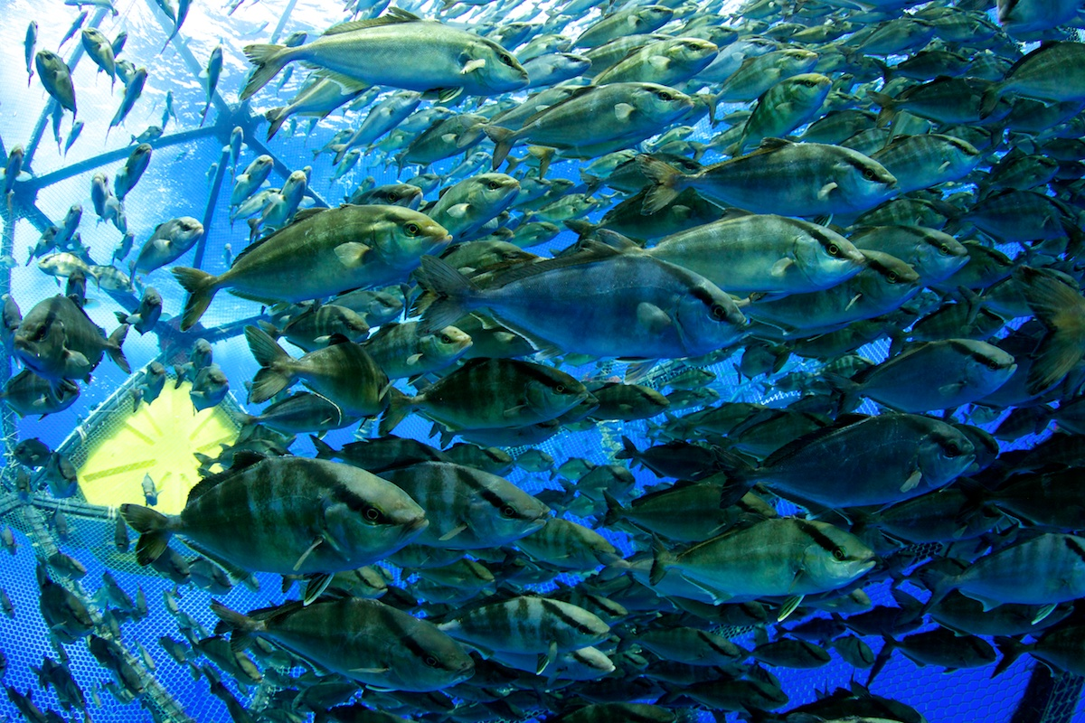 Inside the Aquapod underwater in Hawaii - Velella