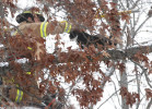 Third Place | Spot NewsJOHN ALTHOUSE, THE DAILY NEWSWith the help of many phone calls and the subsequent arrival of the Jacksonville Fire Department, Brent Cook, firefighter from Jacksonville Fire Department, Station 3, Jacksonville, N.C. rescues Stripe, a neighborhood cat.  Despite the snow and freezing rain that plagued the area, Stripe was stranded in the tree for the past several days along Brookview Dr., Jacksonville, N.C.