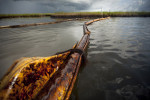 HM | News Picture Story Jessey DearingUNC Chapel HillOil soaks both sides of boom and covers the marsh in Barataria Bay. Despite media coverage, BP public relations and federal government claims, miles of boom remain in the bays of Louisiana and other Gulf states as well as approximately 80 percent of the oil (nearly 160 million gallons) and 1.8 million gallons of dispersant according to the National Oceanic and Atmospheric Administration.
