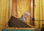 NC Photographer of the YearShawn RoccoNews & ObserverDon Hopkins, an apiarist with the Department of Agriculture, sits inside the cage as he feeds sugar water to the bees on display in the Expo Center.