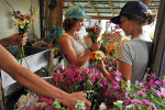 Honorable Mention | Feature Photo Story Erin Brethauer, Asheville Citizen-TimesFlying Cloud Farm interns Anna Long and Havely Carsky arrange flowers for market.