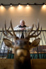 Honorable Mention | PortraitJerry Wolford, News-RecordEddie Bridges framed behind a donated elk head inside the Frank Sharpe Jr. Wildlife Education Center at Bur-Mil Park. Bridges helped get the education center built, spearheading an effort that raised the money to build it.  Bridges says new widows often donated mounted animals to the center.
