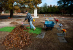 Third Place | Multiple PhotosJames Robinson, The Fayetteville ObserverJames Dickinson rakes leaves onto a piece of carpet Friday morning at Lafayette Memorial Park on Ramsey Street in Fayetteville.