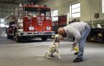 Third Place | Multiple PhotosJohn D. Simmons, The Charlotte ObserverJeff Dixon nuzzles Chief, his six-month-old Dalmatian, that will be part of parades riding on a fire truck next to him after a little more obedience training.