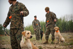POY: Runner UpAndrew Craft, Fayetteville ObserverMarines, with 3rd Battalion 8th Marines, make their Labrador retrievers sit on command during a dog handling course. The marines are training, north of Pinehurst, N.C, with the dogs for an upcoming deployment to Afghanistan, where the dogs will be used to locate IEDs.