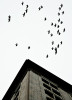 First Place | FeatureAndrew Craft, The Fayetteville ObserverA flock of Rock Doves fly over downtown Fayetteville.