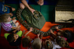 Second Place  | FeatureAndrew Craft, The Fayetteville ObserverKindergartners circle around and pet a Burmese Python as Jake {quote}The Snake{quote} Martin talks about the snake Friday during Patriot Day at Gordon Elementary School in Linden Oaks.