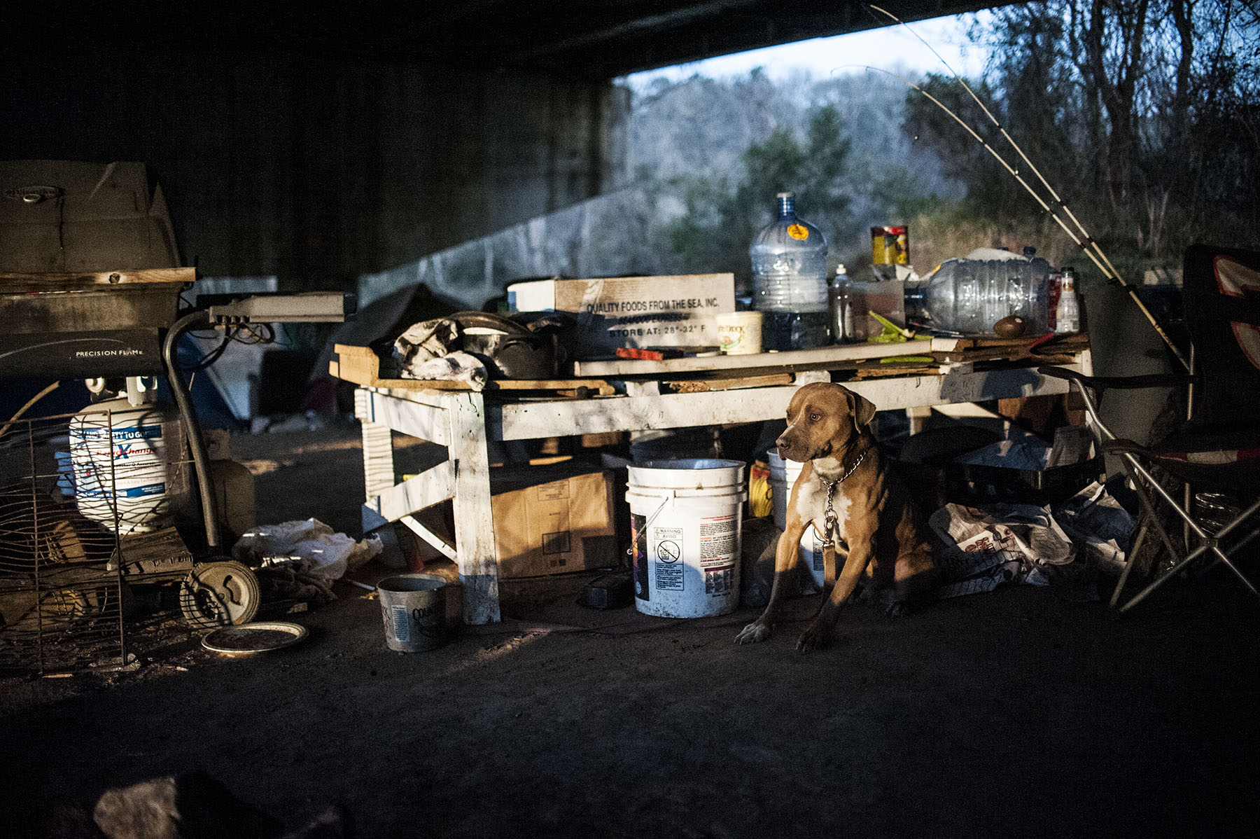 Third Place | News Photo Story Melissa Melvin-RodriguezA dog sits tied up and shivering underneath the Grove Street bridge where a makeshift table and tents are used by homeless people who live there.
