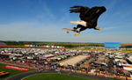 Sports POY: Runner UpJeff Siner, The Charlotte ObserverChallenger, a bald eagle flies toward the infield during the singing of the National Anthem at Charlotte Motor Speedway.