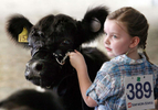 Honorable Mention I FeatureMark Dolejs, Daily DispatchHolly Thornburg, 5, keeps her eye on the judge as she shows her cow in the 4-H Livestock Show at the Granville County Expo Center on Friday afternoon.