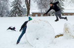 Second Place | FeatureRob Brown, News & RecordGreensboro College student Drew Clukey (right) leaps from a rolled pile of snow to another on the lawn at Greensboro College, Thursday, February 26, 2015.A friend\'s dog, Bella, is at left.