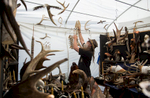 Honorable Mention I General NewsJoshua Komer, Randolph Community CollegeDave Stencel puts up different carving creations made of wood and antlers in preparation of Art Fest in downtown Grand Forks, ND