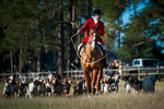 Second Place | Multiple PhotosSara Corce, The PilotHuntsman David Raley (center) leads the hounds to the gathering place for the ceremony during the 2015 Blessing of the Hounds and Thanksgiving Day Moore County Hounds Annual Opening meet at Buchan Field off North May Street on November 26, 2015 in Southern Pines, North Carolina.