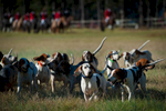 Second Place | Multiple PhotosSara Corce, The PilotHorses, riders and hounds gather for the ceremony during the 2015 Blessing of the Hounds and Thanksgiving Day Moore County Hounds Annual Opening meet at Buchan Field off North May Street on November 26, 2015 in Southern Pines, North Carolina.