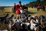 Second Place | Multiple PhotosSara Corce, The PilotHuntsman David Raley stands with the hounds before the ceremony during the 2015 Blessing of the Hounds and Thanksgiving Day Moore County Hounds Annual Opening meet at Buchan Field off North May Street on November 26, 2015 in Southern Pines, North Carolina.