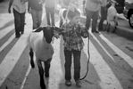 POY: Runner UpJill Knigt, The News & ObserverSloane Hinnant, 4, of Wilson, N.C. walks her lamb, Mr. Isabelle, into the exposition center for the Junior Market Lamb Showmanship Champion contest Thursday, October 15, 2015 at the NC State Fair in Raleigh, N.C.