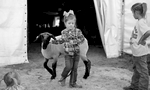 POY: Runner UpJill Knigt, The News & ObserverSloane Hinnant, 4, of Wilson, N.C. walks her lamb before the start of the Junior Market Lamb Showmanship Champion contest Thursday, October 15, 2015 at the NC State Fair in Raleigh, N.C.